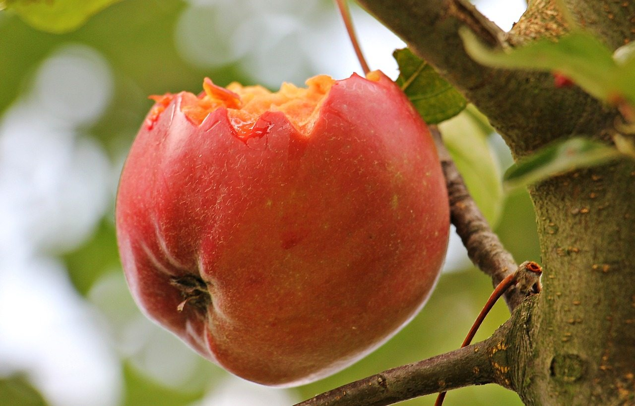 Dating Non Christians The Forbidden Fruit Marriage