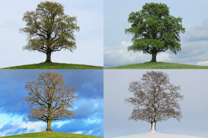Seasons Pixabay - tree-776932_640