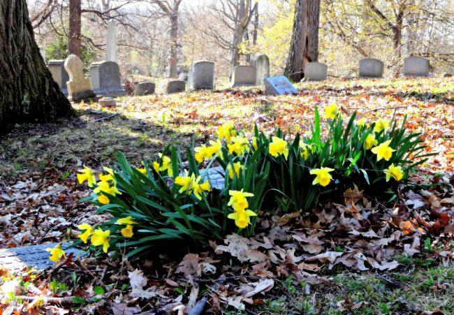 spouse dies - Pixabay flowers-980050_1280