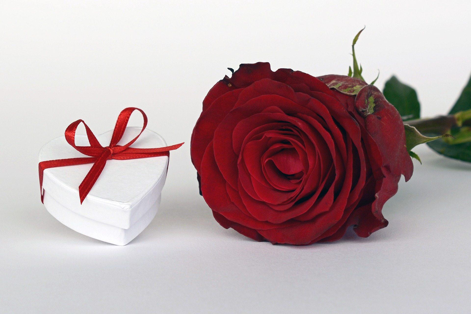 Valentines Pixabay rose-2019692_1920