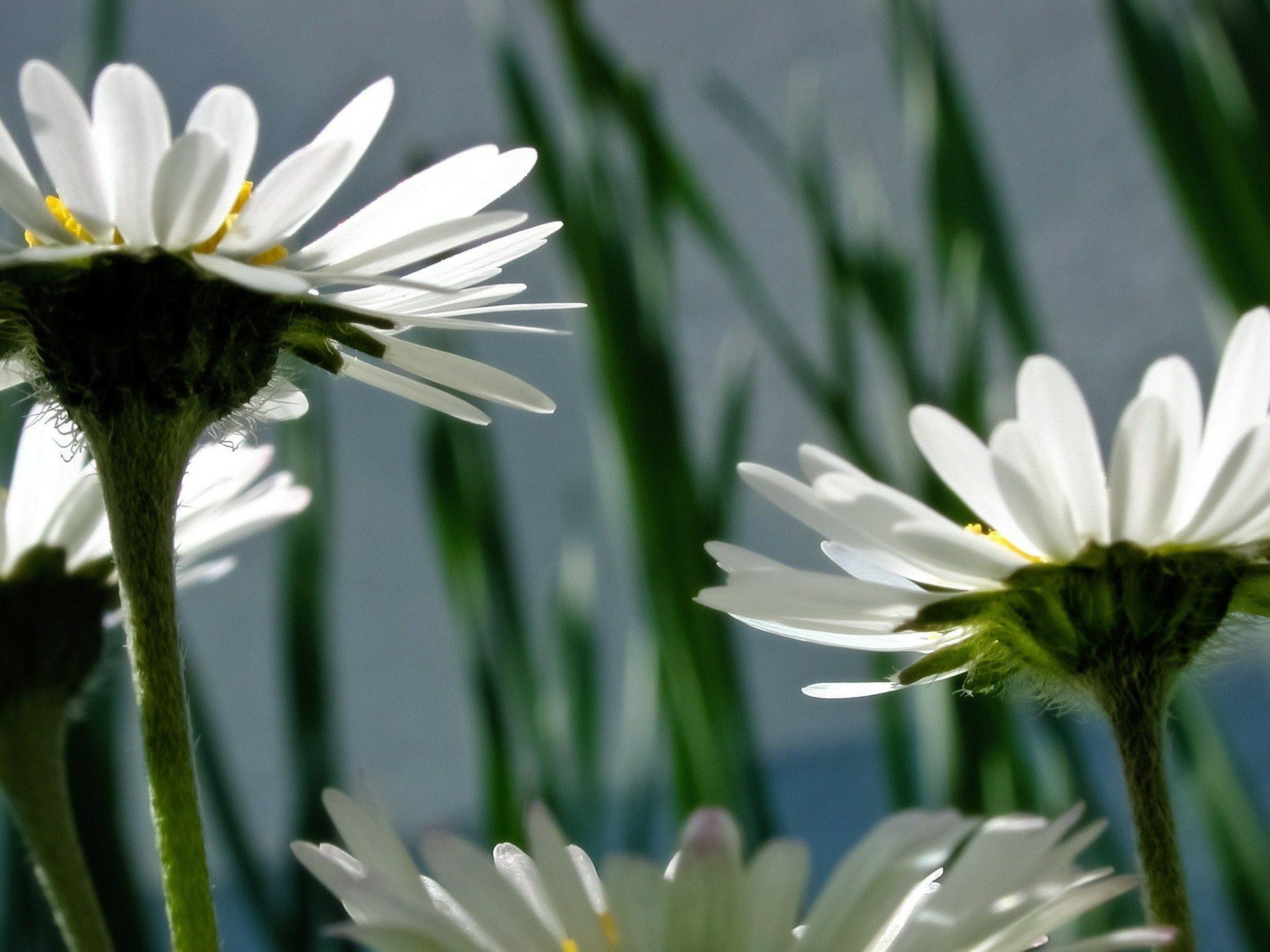 Quick Fix Pixabay flowers-64127_1920