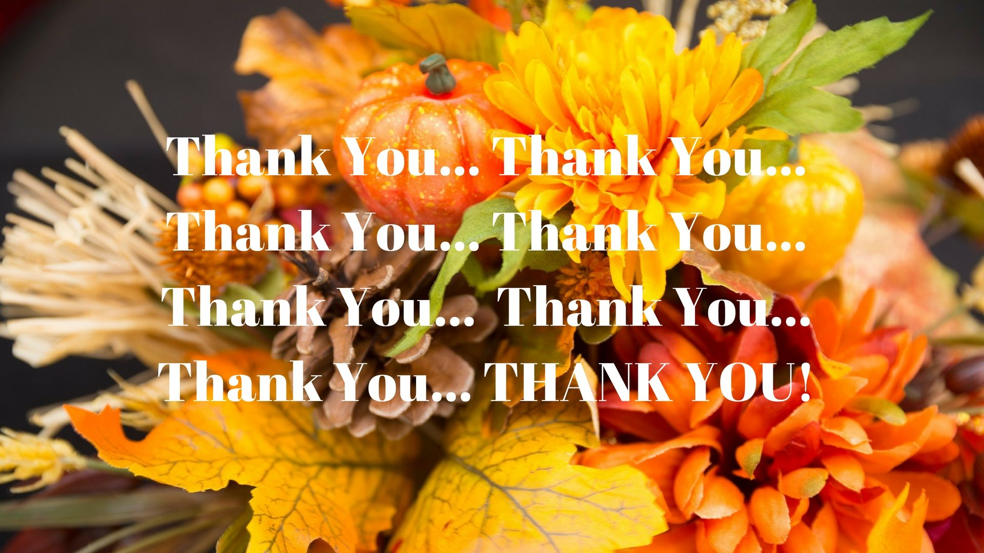 Peaceable celebrating Thank You... Thank You... Pixabay Canva