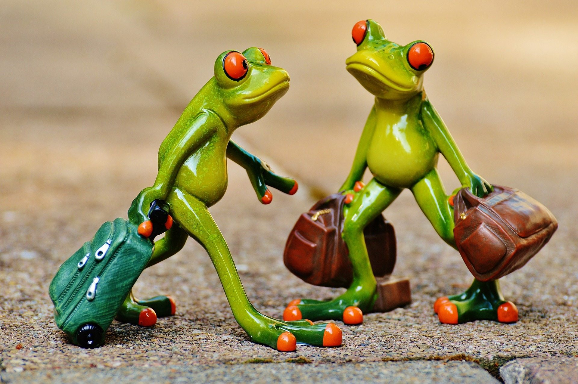 holiday expectations Pixabay frogs-897387_1920