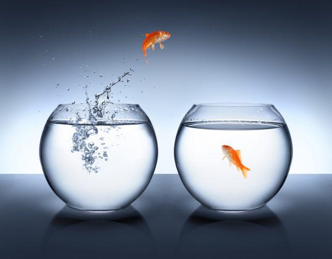 Fish bowl conversations - AdobeStock_61090691