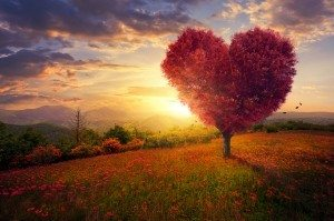 resurrected love - Dollar Photo Red heart shaped tree
